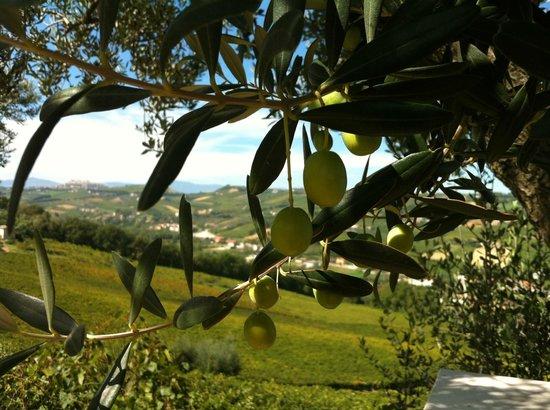 Agriturismo Montupoli : Underbar utsikt över Montupoli