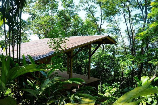 Tiskita Jungle Lodge: Yoga Deck