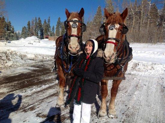 4 Seasons Inn on Fall River : Sleigh ride with Rosie & Cody