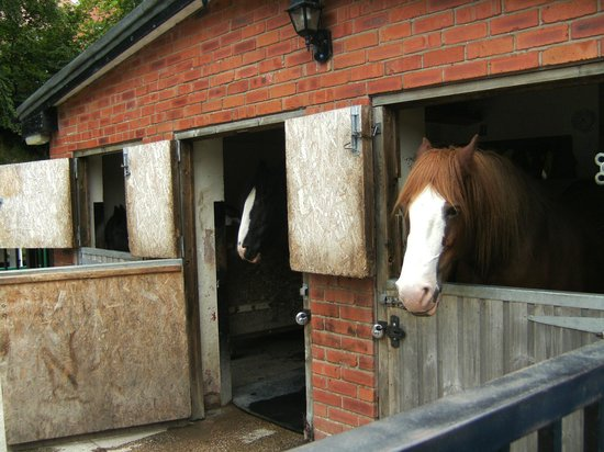 Llangollen Canal: Stables with inmates.