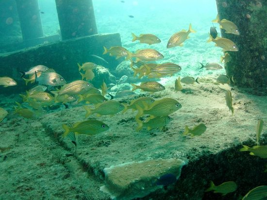 Scuba Club Cozumel: Under the pier