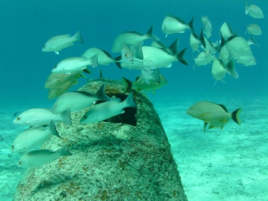 Scuba Club Cozumel: House reef