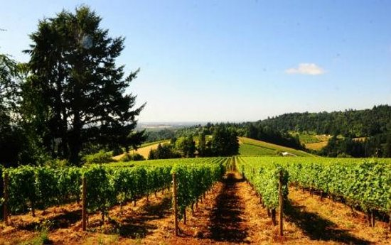Winderlea Vineyard and Winery: Sweeping Vineyard Vista