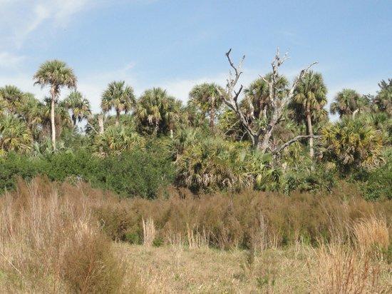 Paleo Hammock Preserve: Dec 28, 2012