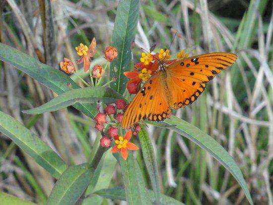 Paleo Hammock Preserve: Butterfly