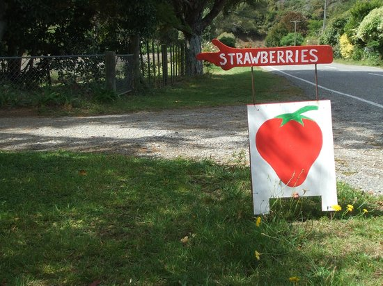 The Gentle Cycling Company: Berry garden near the Great Taste Cycle Trail, Nelson NZ