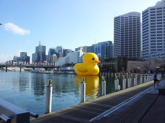 أسترال تاور آند ريزيدنس آت ذا ستار: The Gigantic Rubber Duck at Darling Harbour. 5minute walk. till 23rd January 