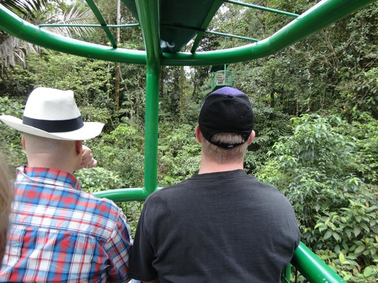Rainforest Adventures: Tram view
