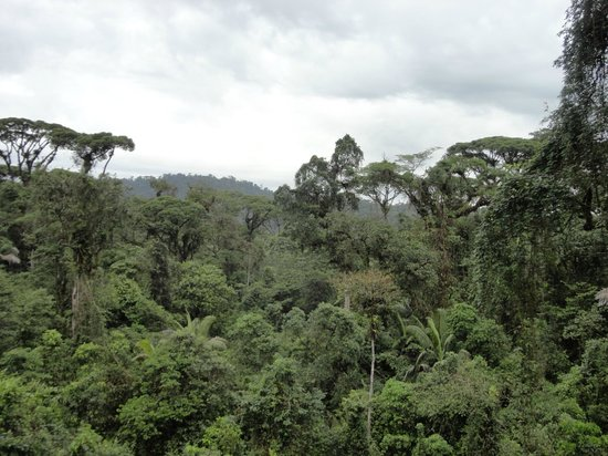 Rainforest Adventures: Top of the trees from tram