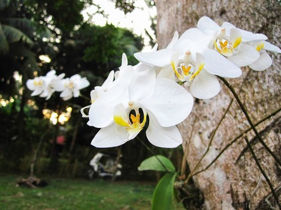 El Cielo Mansion: Some orchids growing on a tree by the driveway