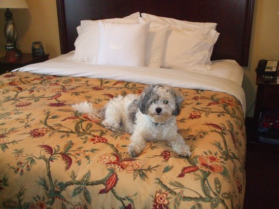 Homewood Suites by Hilton Portland: Lucky my dog enjoyed his visit