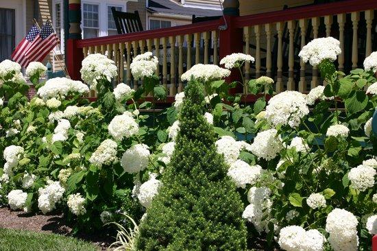Albert Stevens Inn: White Hydrangeas