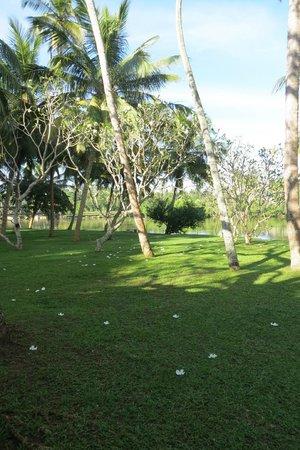 Villa Modarawattha: Gardens