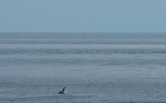Onlyou Villas: Dolphins in front of the Villa - 3