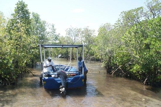 Kilwa Kisiwani: Terugtocht door het mangrovebos