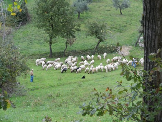 Italy Farm Stay : Shepherd with the sheep.