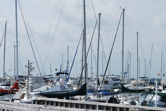 Charleston Harbor Resort & Marina: huge marina