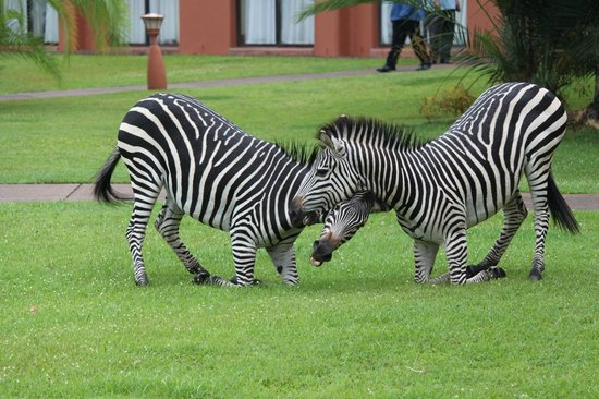 AVANI Victoria Falls Resort: Other hotel guests!
