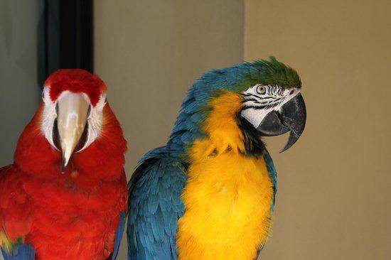 Sheraton Waikiki: birds