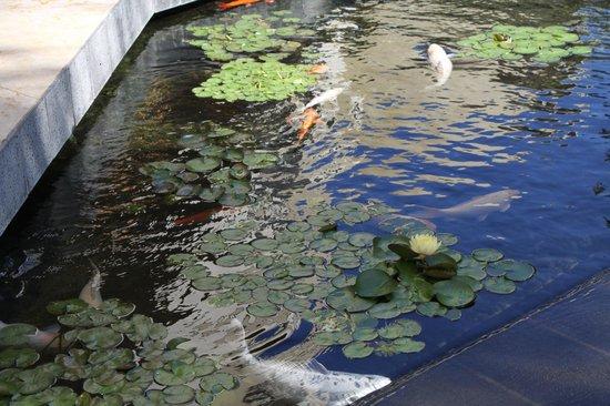 Sheraton Waikiki: fish pond