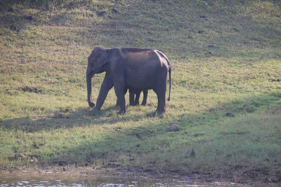 Thekkady - Woods n Spice, A Sterling Holidays Resort: Elephant watching on Periyar Lake