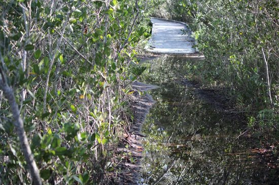 Matanzas Pass Preserve: Emerging from the mud