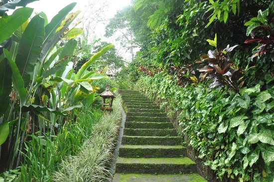 Munduk Moding Plantation : the way from villa to lobby