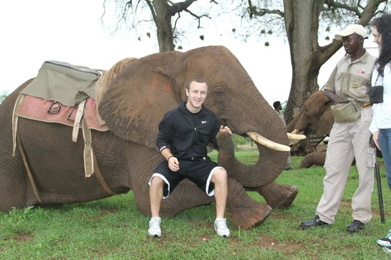 "A'Zambezi River Lodge: ""Elephant experience"" activity"
