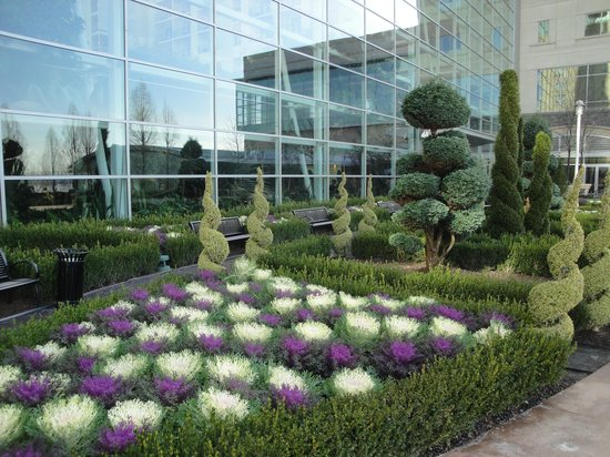 Colorful, hardy winter cabbages and topiary outside atrium, on walk ...