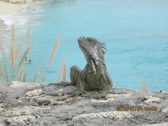 Rainbow Beach Club: Iggy the Iguana