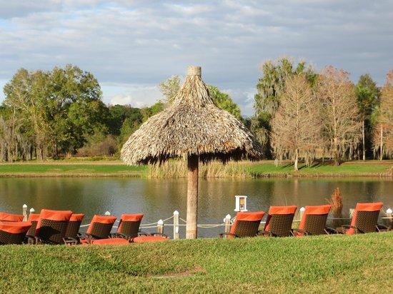 Hyatt Regency Grand Cypress: The sunbathing area overlooking the lake (NO swimming)