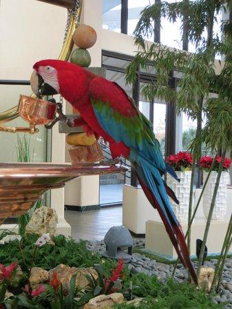 Hyatt Regency Grand Cypress: Another pic of Merlot, the hotel parrot