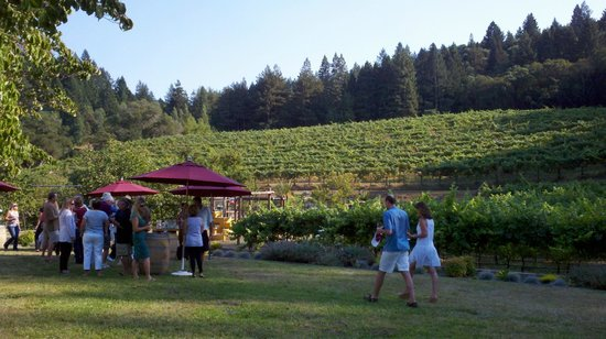Yates Family Vineyard: looking up at the vineyard and redwood trees