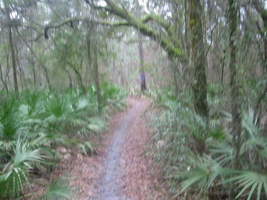 Bushnell Bed and Breakfast: Horse trail through palmetto stand in forest across from OFH