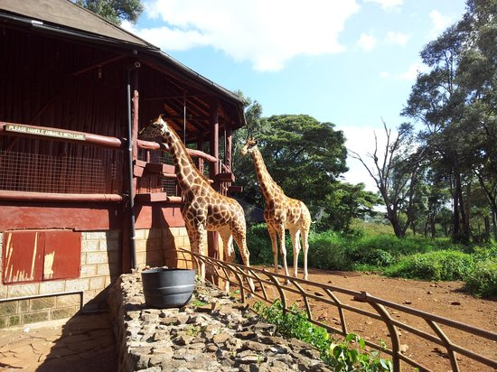 Fairmont The Norfolk: Giraffee Centre Nairobi