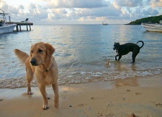 Hotel Chillies: Doggies!!!!
