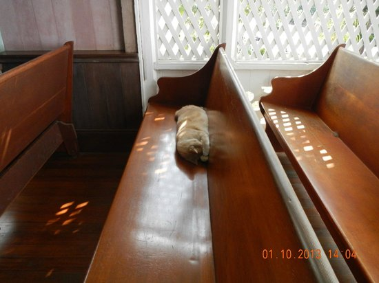 The Painted Church: feline congregant