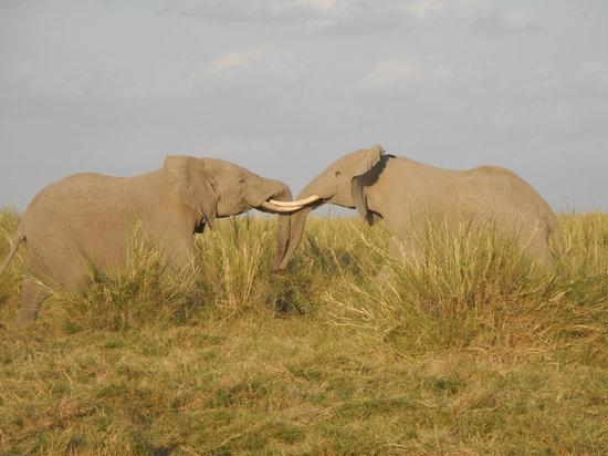 Francosafarikenya - Day Tours