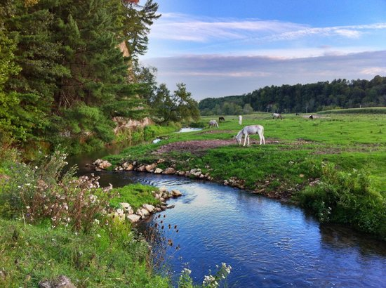 Jacquish Hollow Angler & Anglers' Inn : One of the nearby streams I fished with Dave's guidance