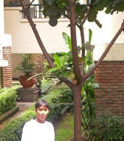 Topas Galeria Hotel: lovely garden...