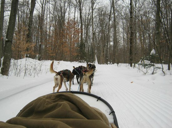 Eden Dogsledding: Riding in the Sled-covered with blankets.