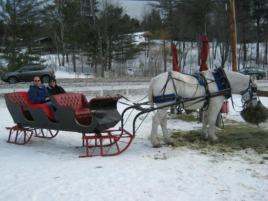 Gentle Giants Sleigh and Carriage Rides: Getting ready to go!