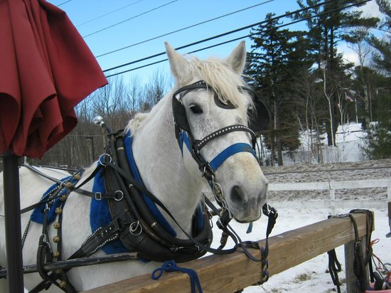 Gentle Giants Sleigh and Carriage Rides: Handsome Jack