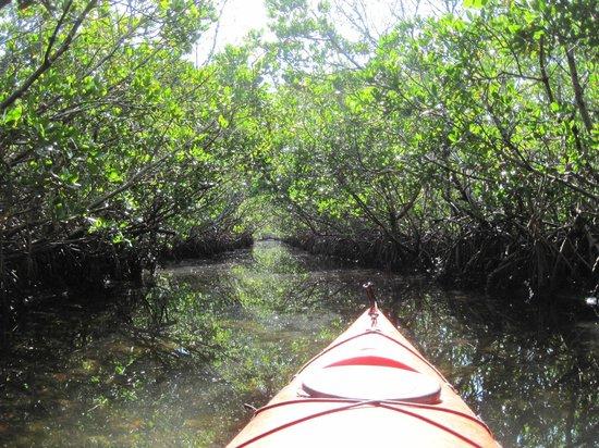 Grande Tours Kayak & Paddleboard Center: The Mangrove Tunnel