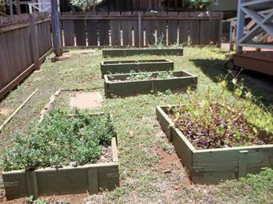 Merveilleux Hawaii Plantation Village: Community Herb Garden.