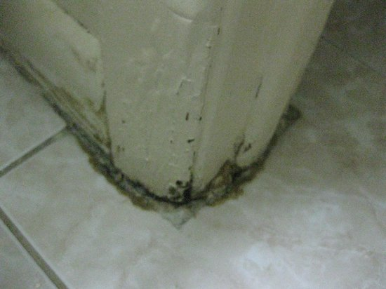 Super 8 Florida City/Homestead: Mold around bathroom trim