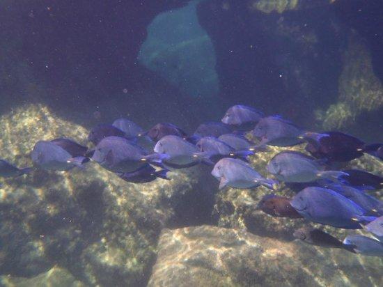 Grand Sirenis Riviera Maya Resort & Spa: YalKu