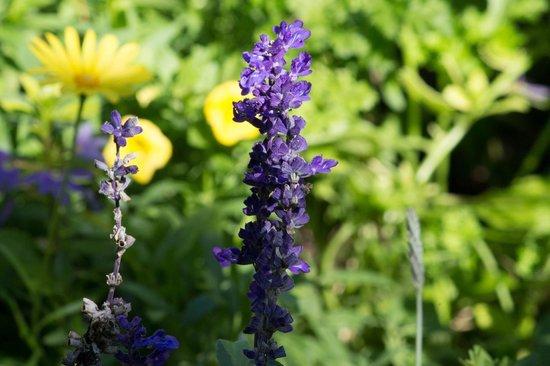 Heathcote Botanical Gardens: Purple flowers