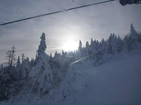 Killington Resort: Looking at frozen trees