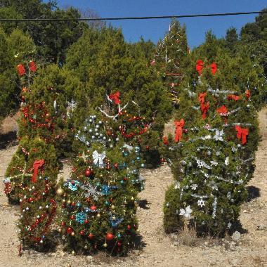 Austin 360 Christmas Tress 2012